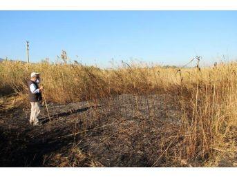 Bafa Tabiat Parkı'nda Sazlık Yangını