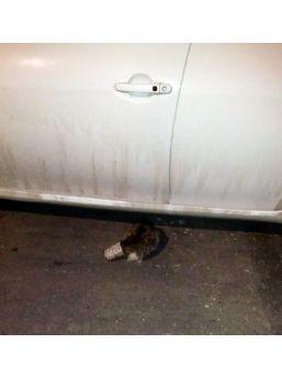 Minik Kedi İçin Gece Mesaisi