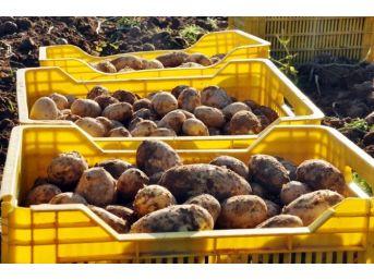 (özel) Patatesin Fiyatı Geçen Yıla Göre Yarıya Yarıya Düştü