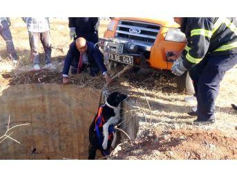 Kuyuya Düşen Köpek Operasyonla Kurtarıldı