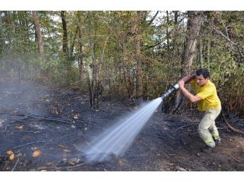 Alaplı'da Ormanlık Alanda Yangın