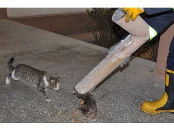(özel Haber) Yağmur Suyu Tahliye Borusuna Sıkışan Kediyi İtfaiye Ekipleri Kurtardı