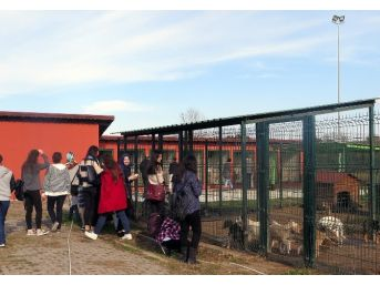 Sapanca Myo Öğrencilerine Sakarya Gezisi Düzenlendi