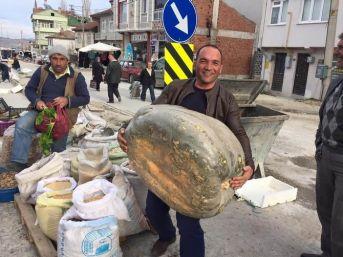 65 Kiloluk Kabak Şaşırttı