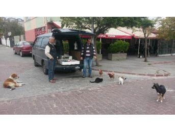 Kedi Ve Köpeklerin Balık Nöbetine Tavuklar Da Katıldı