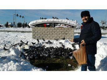 Karda Kışta Güvercinleri Aç Bırakmıyor