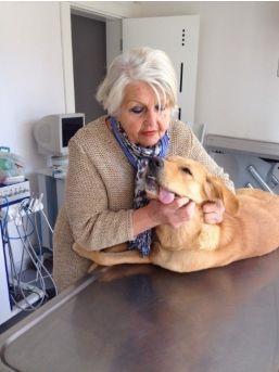Selçuk'ta Köpekler Kısırlaştırılıyor
