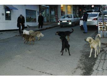 Köpeklerin Kavgası Vatandaşı Korkuttu