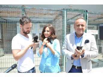 Kastamonu Belediyesi, Sokak Hayvanlarını Koruyor