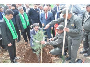 Kozan'da 10 Bin Fidan Toprakla Buluştu