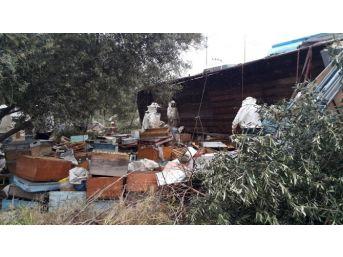 Arıkovanı Taşıyan Tır Yoldan Çıktı, Yüzlerce Kovan Arı Telef Oldu