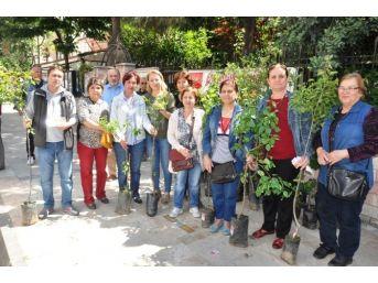 Chp Ödemiş'ten Annelere Meyve Fidanı