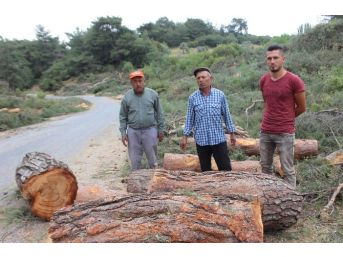 Orman Müdürlüğü'nden Çavdar'daki Ağaç Kesimiyle İlgili Açıklama