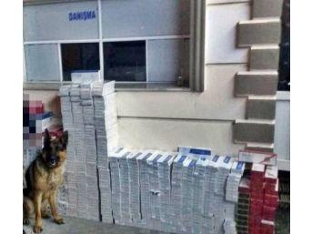 Gümrük Kaçağı 10 Bin Paket Sigara Ele Geçirildi