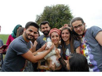 Burdur'da Keçi Projesi Başladı