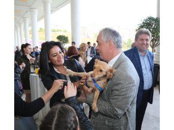 'sokak Köpekleri Bal İle Betty'nin Galası Yapıldı