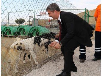 Başkan Şirin Hayvan Barınağı Eleştirilerine Cevap Verdi