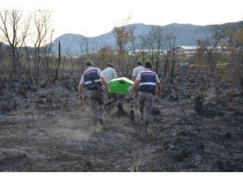 Balık Tutmaya Gitti, Orman Yangının Ortasında Kaldı