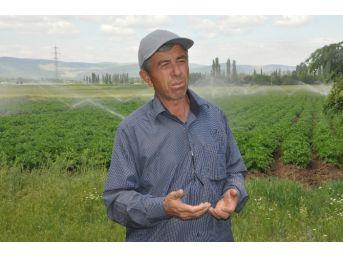 Sandıklı'da Çiftçi Patates Fiyatından Endişeli