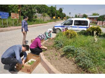Azdavay'da Park Ve Bahçeler Yeşillendiriliyor