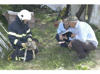 Yaralı Kuzuya İtfaiye Şefkati