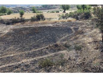 Yangın 25 Dönümlük Ekili Araziyi Küle Çevirdi