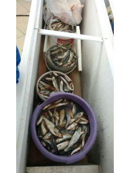 Van'da Kaçak Balık Denetimleri