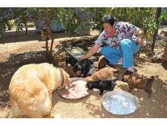 Köpek Ve 9 Yavrusu Sokağa Terk Edildi