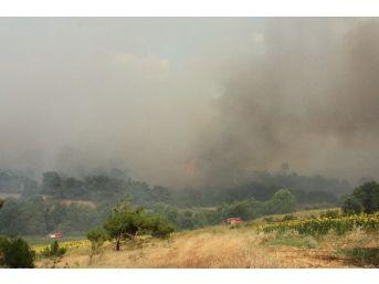 Edirne'deki Orman Yangını Etkisini Arttırıyor