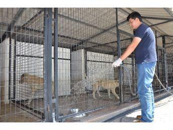 Barınak Hayvanları Sıcaklıklara Karşı Su İle Serinletiliyor
