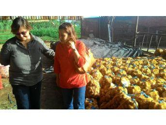 Konak Belediyesi Üreticiye Destek İçin 110 Ton Patates Aldı