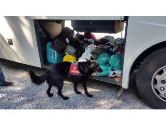 Milas'ta Yolcu Otobüsünde Uyuşturucu Hap Ele Geçirildi