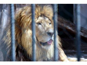 Hayvanat Bahçesi Sakinlerinin Sıcakla İmtihanı