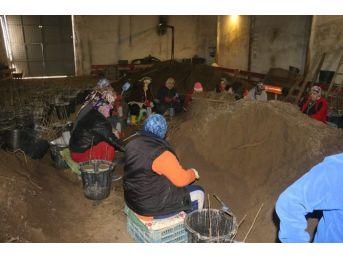 Zonguldak Tüplü Fındık Üretimini Başarı İle Tamamladı