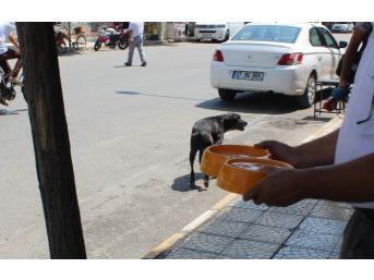 Kavurucu Sıcaklarda Sokak Hayvanlarına Bir Kap Su