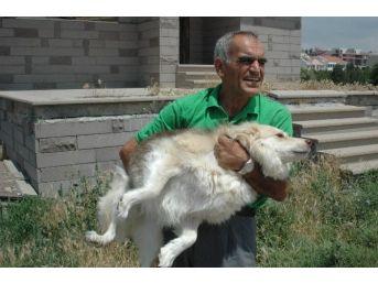 Emekli Maaşıyla 65 Köpeğe Bakıyor