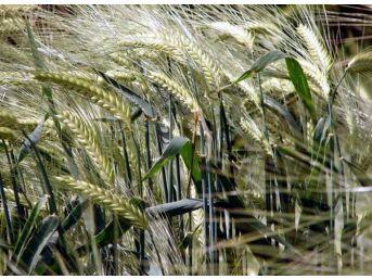 Ak Parti'li Erdem, Başbakan Yıldırım'ın Çiftçiyle İlgili Müjdelerini Paylaştı