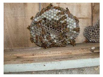 Ramazan Dolayısıyla Arıları Öldürmek İstemeyince Özel Ekip İstedi