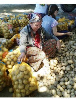 Patates Üreticilerine Bir Destekte Narlıdere Belediyesi'nden