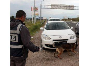 Uyuşturucu Tacirleri Narkotik Köpeği Sedef'ten Kaçamadı