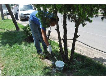 Hayrabolu'da Sokak Hayvanları İçin Su Kabı