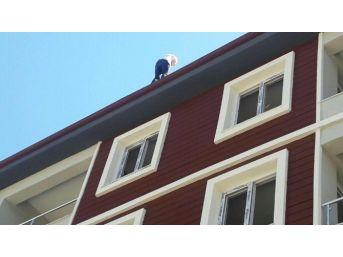 5 Katlı Apartmanın Çatısından Düştü