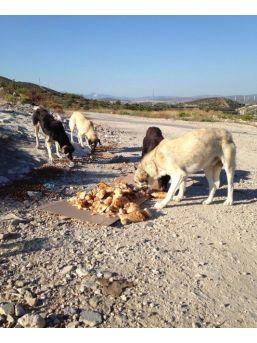 Çesal, Çeşme'de Sokak Köpeklerine Sahip Çıktı