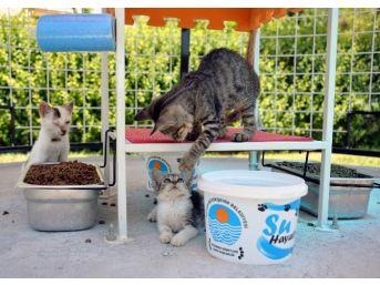 Mersin'de 40 Noktaya Daha Kedi Sığınma Evi Yerleştiriliyor