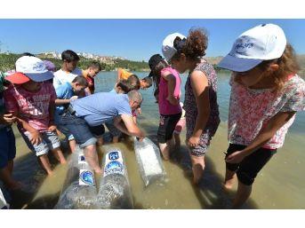 Ankara Büyükşehir, Göletlere Balık Bırakıyor