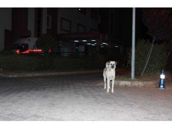 Aydın'da Sokak Köpekleri Korku Salmaya Başladı