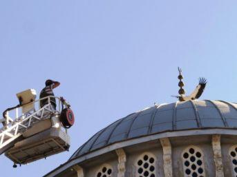 Cami Kubbesinden Düşen Yavru Leylek Kurtarıldı