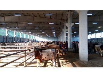 Samsun'da Tarım Ve Hayvancılık Yatırımları