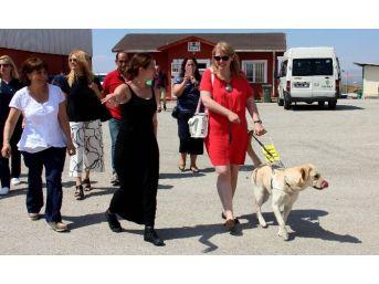 Magie Moore Rehber Köpekler İçin Barınakta