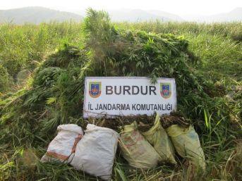 Burdur'da 11 Kilo Esrar Ve 6 Bin 750 Kök Kenevir Ele Geçirildi